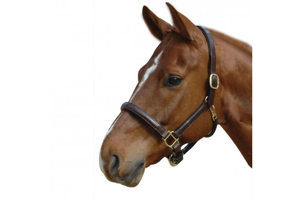 Albion Leather Headcollar