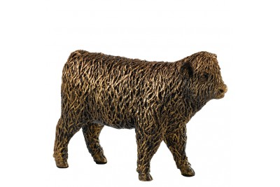 Bronzed Highland Calf Walking